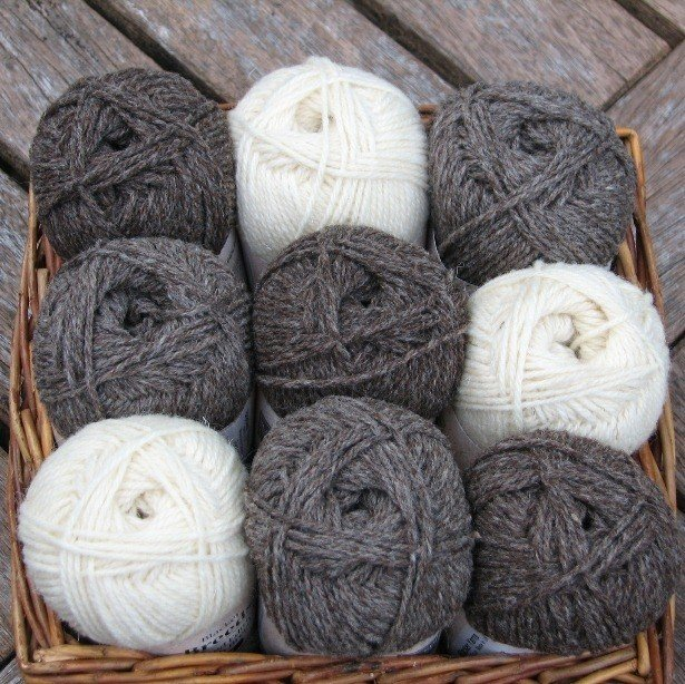 Coloured Ryeland 2 - Blacker Yarns